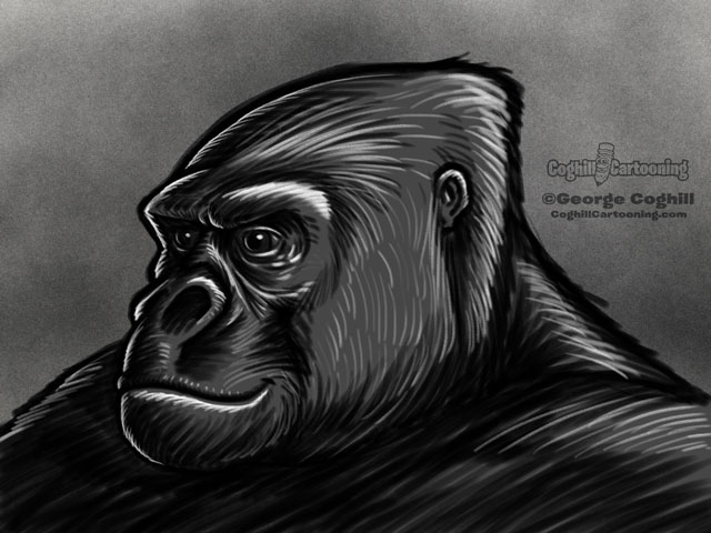 Gorilla Head 2 Illustration Rough Sketch