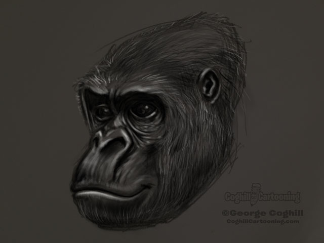 Gorilla Head 2 Sketch