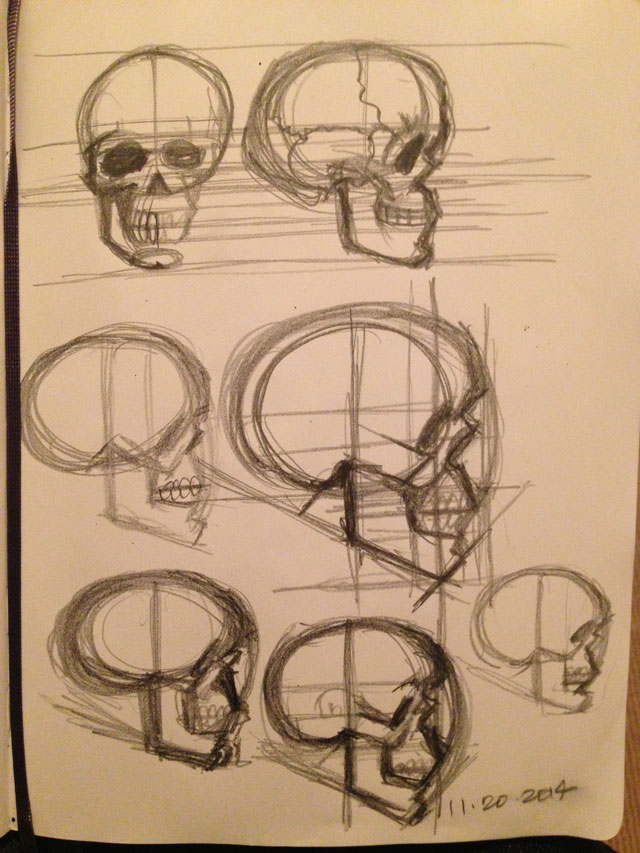 Skull Studies Side View Sketch