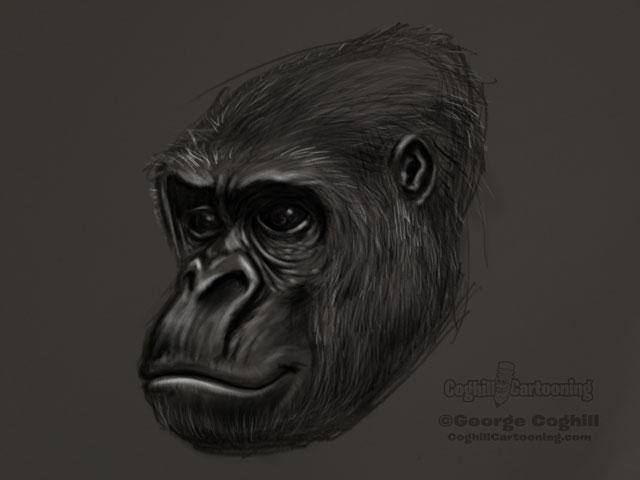Gorilla Head 2 Sketch