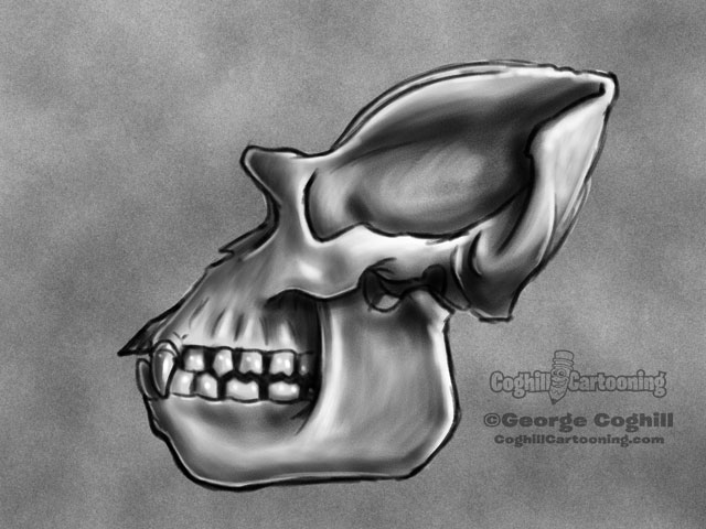 Gorilla Skull 2 Cartoon Sketch